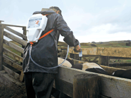 Treat cattle before winter to maximise your next lactation