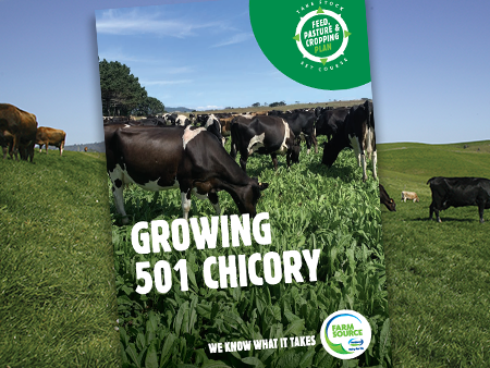Chicory 501 Booklet