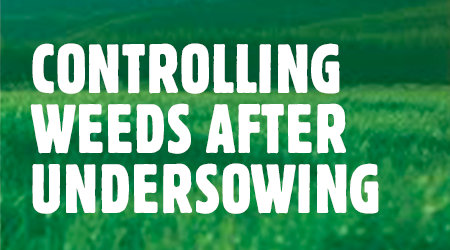 controlling-weeds