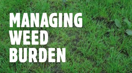 mange-weed-burden
