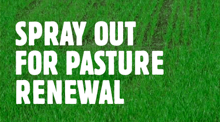 spray-out-for-pasture-renewal