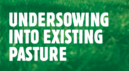 under-sowing-existing-pasture