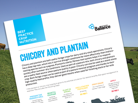 Best Practice Crop Nutrition - Chicory & Plantain