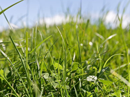 Pasture and clover seed quick reference Guide