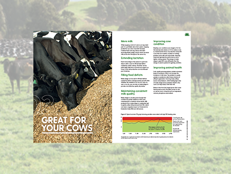 Why Maize is good for your cows