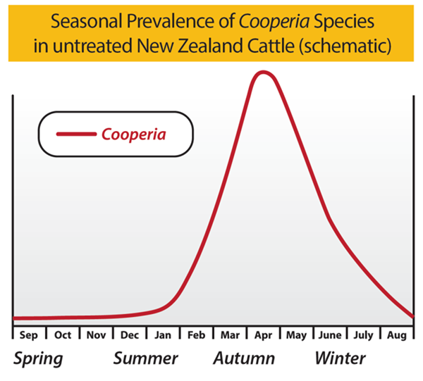 Seasonal Prevalence of Cooperia Species in untreated NZ cattle graph