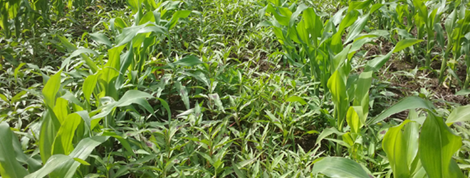 Mix it up: optimising spring herbicide applications