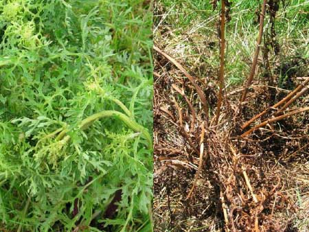Planning the right spring weed control programme