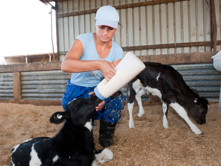 The importance of colostrum management