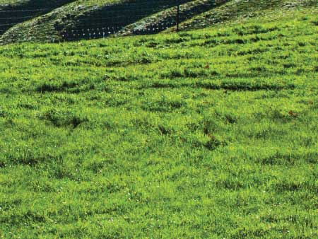 Give spring sown crops and grass a good start