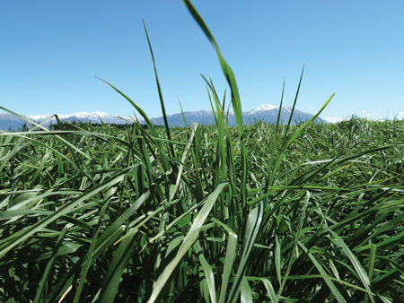 Building pasture resilience