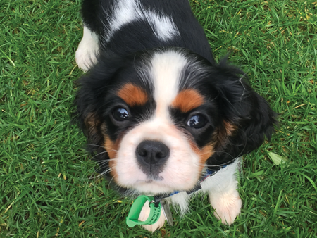 Meet Brie – The puppy who's being trained to make a difference