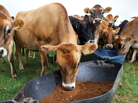 Managing on-farm  feed requirements