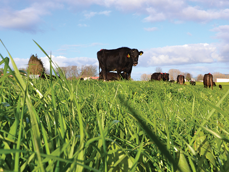 Growing more grass at Owl Farm: Using quality cultivars and getting results