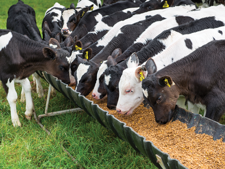 A proven formula for healthier calves and better growth
