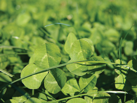 Get back in clover with spring oversowing