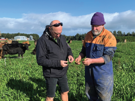 Boosting summer milk production with Ecotain
