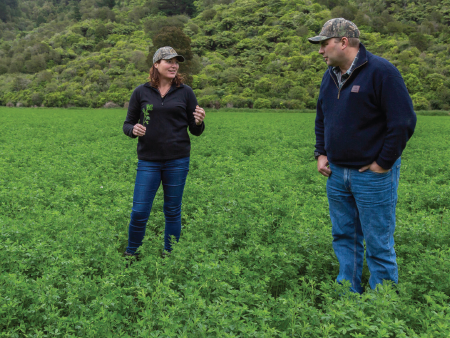 Pioneer Lucerne delivers quality feed