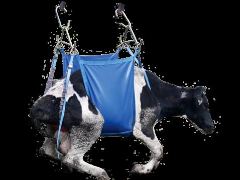 Shoof Daisy Mk2 Cow Lifter Standard Cpt Nz Farm Source
